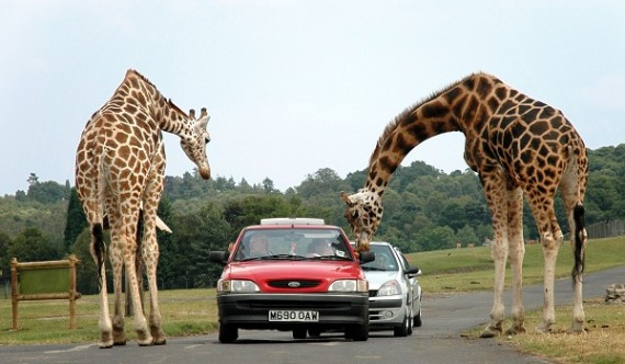 رحلة أفريكا سفاري بارك Africa park